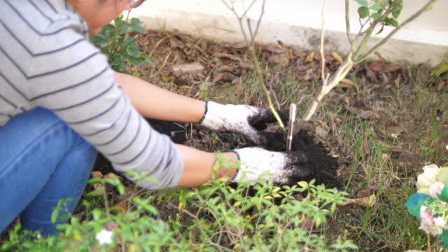 slo mo planting a tree - pianta coltivata video stock e b–roll