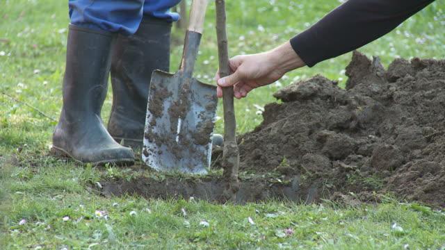 vidéos et rushes de hd : planter un arbre - plante