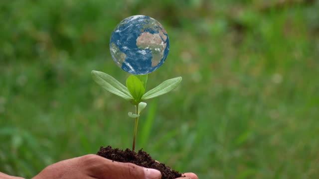 vídeos de stock e filmes b-roll de planting a tree with the earth rotation on a small tree. - espalhar