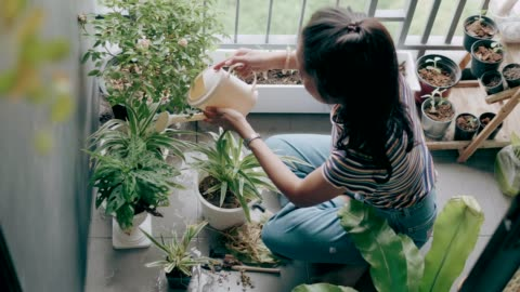 planting and watering the tree ideas with small space-stock vdo - balcony stock videos & royalty-free footage