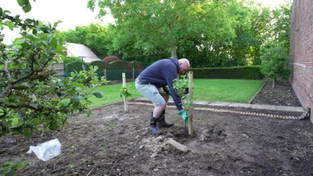 planting apple tree - gardening glove stock videos & royalty-free footage