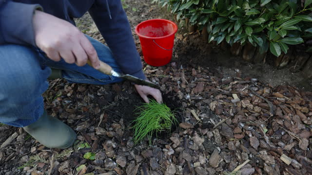 planting chives - annick vanderschelden stock videos & royalty-free footage
