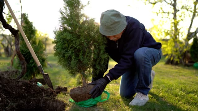 planting evergreen tree - evergreen stock videos & royalty-free footage