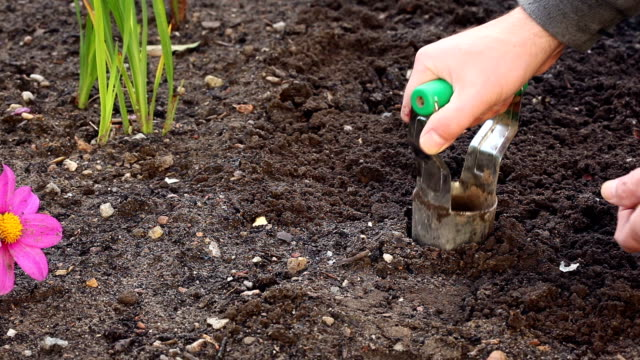 planting flower bulbs - 1959 stock videos & royalty-free footage