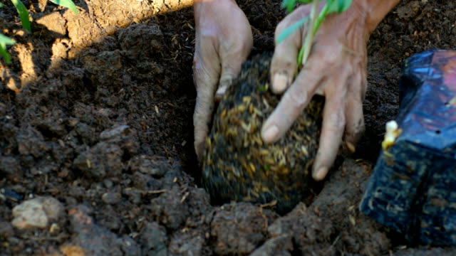 planting flower in garden - potting stock videos and b-roll footage
