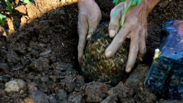 blume anpflanzen im garten - topfpflanze stock-videos und b-roll-filmmaterial