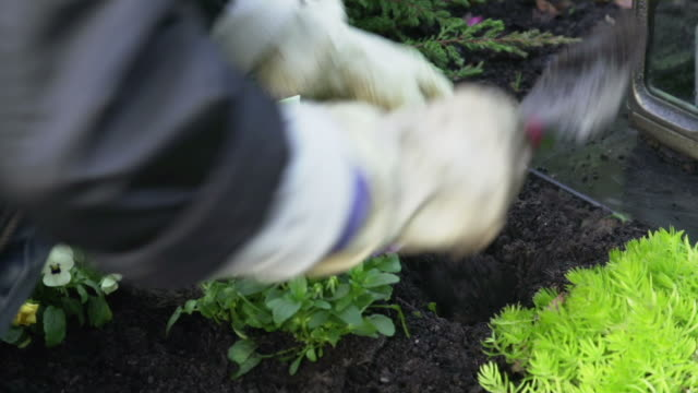 planting flowers on grave - flowerbed stock videos & royalty-free footage