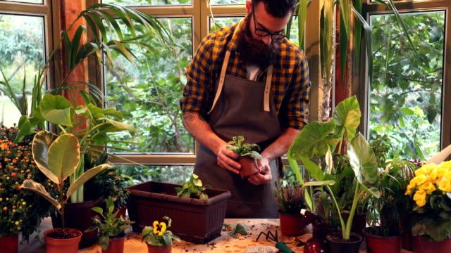 vidéos et rushes de planter des fleurs - végétation verdoyante