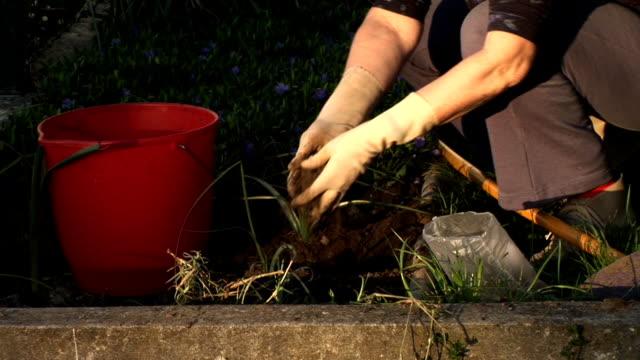 vidéos et rushes de hd : planter des fleurs - gant de jardinage