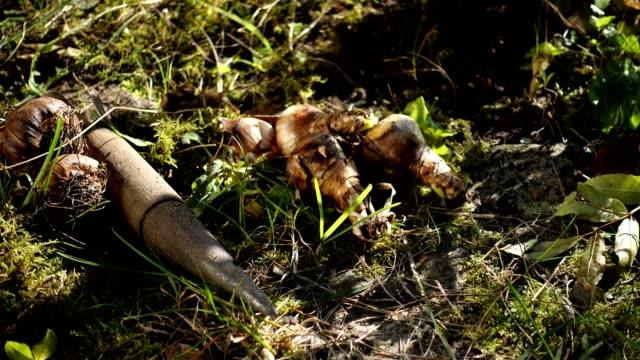 vidéos et rushes de planting new early bloomers. - gant de jardinage