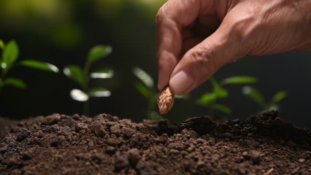 vidéos et rushes de planter des graines et arroser - graine