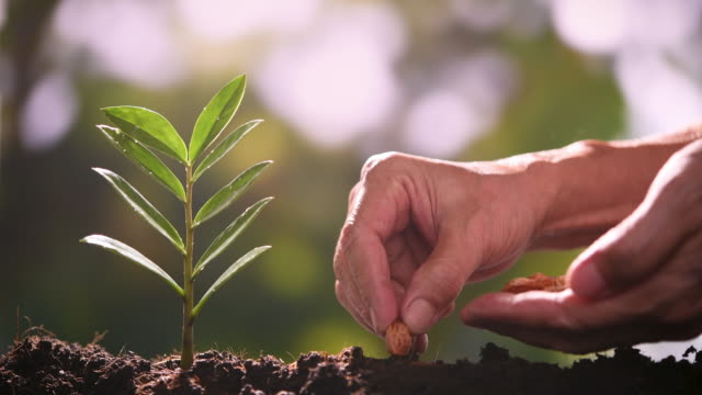 vídeos de stock, filmes e b-roll de plantando a semente e rega árvore jovem - regando