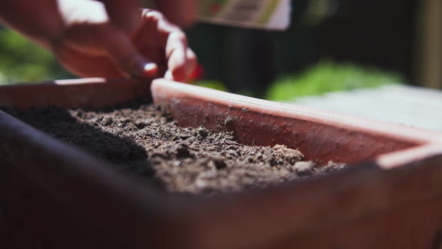 planting seed outdoor. - seed stock-videos und b-roll-filmmaterial