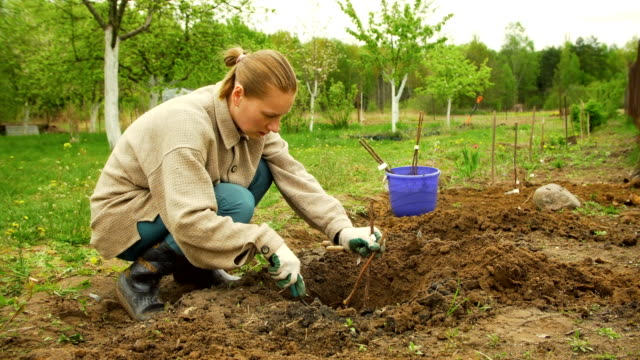 planting seedling - self sufficiency stock videos and b-roll footage