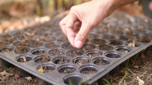 planting seeds at home - fagiolo video stock e b–roll