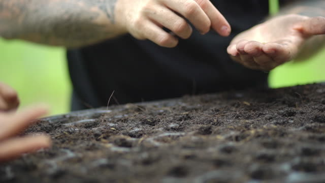 planting seeds on the seedling tray - planting stock videos & royalty-free footage