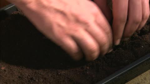 vidéos et rushes de ecu planting seeds, pan across herbs, hands - graine