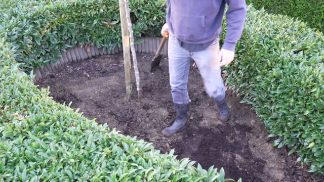 planting tree - annick vanderschelden stock videos & royalty-free footage