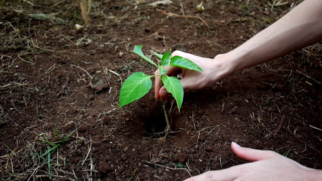 Planting trees for Nature Conservation