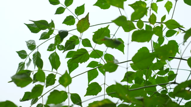 plants and green leaves while raining - bush stock videos & royalty-free footage
