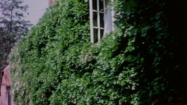vídeos de stock e filmes b-roll de 1964 pov plants and ivy covering wall and buildings, down the street and to a window displaying pottery / aldermaston, berkshire, england - aldermaston