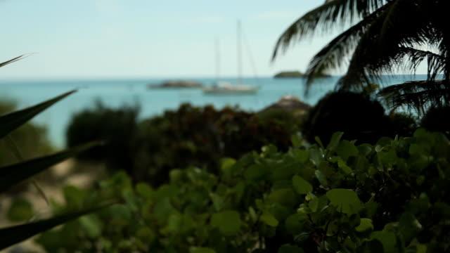 MS R/F Plants and sailboat moored in Caribbean Sea / Nassau, New Providence, Bahamas