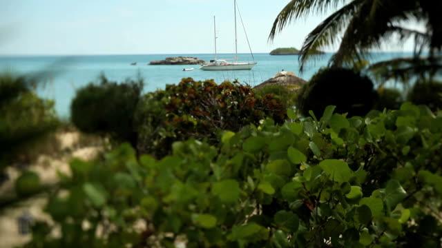 MS TU Plants and sailboat moored in Caribbean Sea / Nassau, New Providence, Bahamas