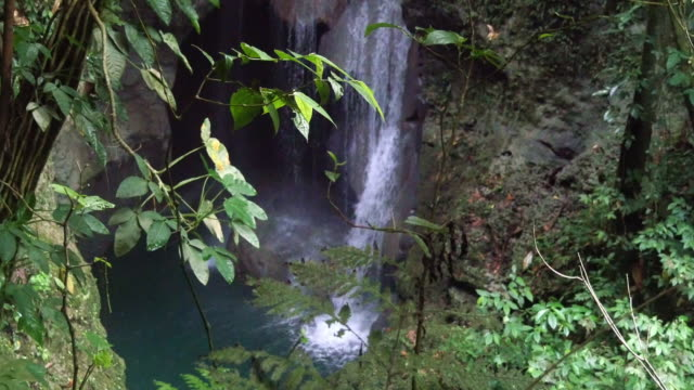 plants and waterfall in the jungle - jamaica stock videos & royalty-free footage