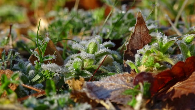plants covered in ice - frozen stock videos & royalty-free footage