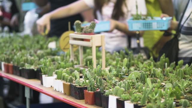 stockvideo's en b-roll-footage met planten van verschillende soorten cactussen in de lokale markt - vetplant
