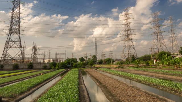 Plants fied under high-voltage line