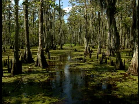 plants float near cypress trees in a louisiana swamp. - louisiana stock videos & royalty-free footage