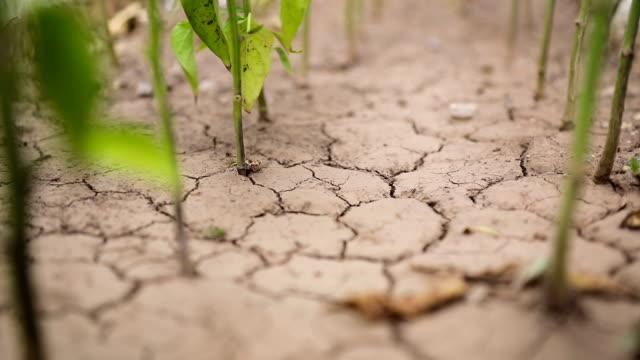 Pflanzen wachsen aus trockene rissige Erde
