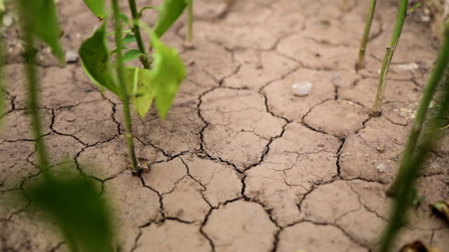 plants growing from dry cracked earth - terra brulla video stock e b–roll