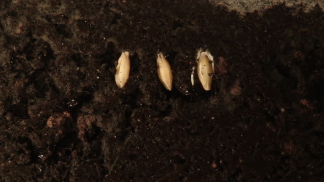 plants growing from seeds. - germinating stock videos & royalty-free footage
