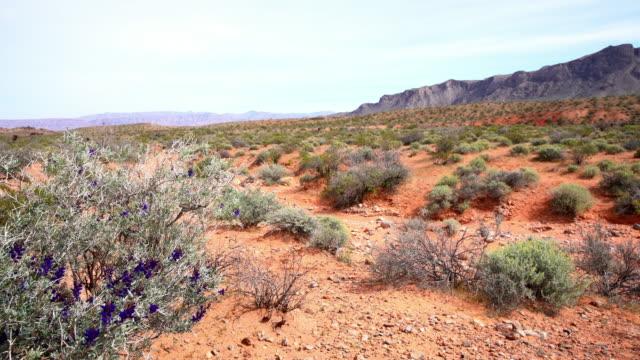 DS-Pflanzen wachsen in der Wüste von Utah