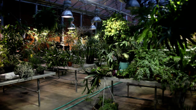 plants growing in university green house - centro di ricerca video stock e b–roll