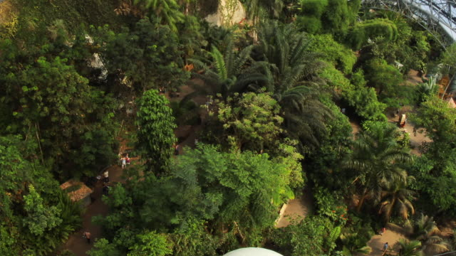 t/l plants growing inside the biomes of the eden project / st. austell, england, united kingdom - st austell stock videos & royalty-free footage