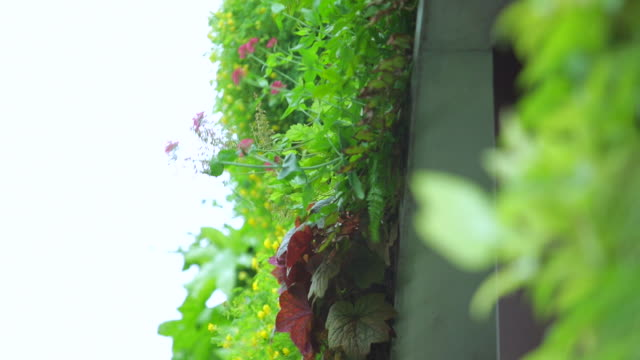 plants growing on the concrete wall of a house - concrete wall stock videos & royalty-free footage