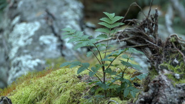 cu, selective focus, plants in forest, near wast water, cumbria, england - moss stock videos & royalty-free footage