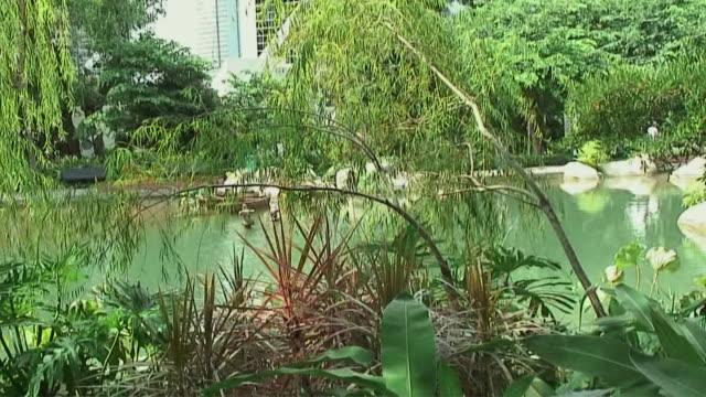 ws tu plants in park outside new bank of china, hong kong, china - bank of china tornet hongkong bildbanksvideor och videomaterial från bakom kulisserna