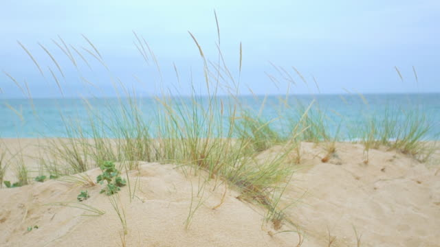 stockvideo's en b-roll-footage met plants in the beach moving with the wind delightful beach with nobody - silvestre