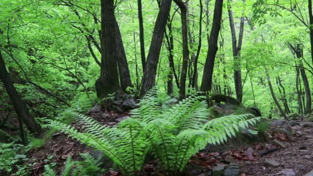 plants in the forest / hongcheon-gun, gangwon-do, south korea - エコツーリズム点の映像素材/bロール