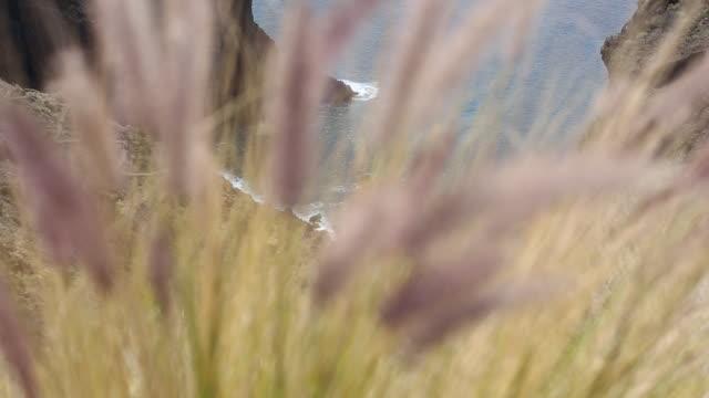 Plants moving with air La Palma Island, Canary Islands