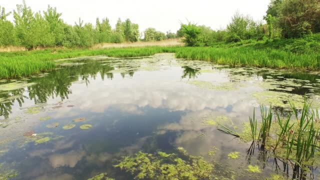 vidéos et rushes de vue aérienne d'une zone humide d'eau douce de plantes - dépression terrestre