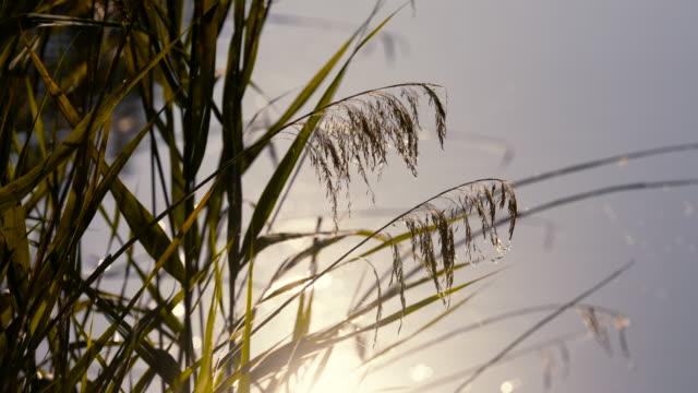 pflanzen am seeufer - seeufer stock-videos und b-roll-filmmaterial