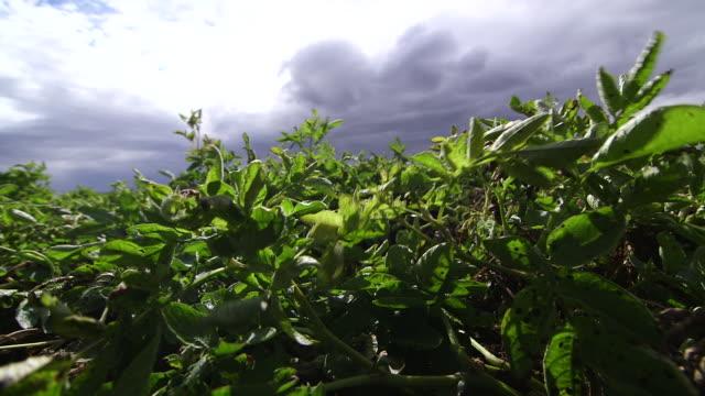 vídeos y material grabado en eventos de stock de plants & sky low angle - wiese