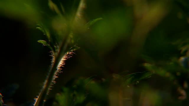 Plants stems, close up