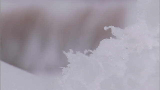 plants sway in a breeze on a hill near a highway. - ice crystal stock videos & royalty-free footage