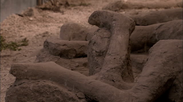plaster casts of pompeii citizens litter the ground in the garden of fugitives. available in hd. - plaster stock videos and b-roll footage